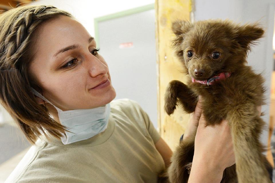 marketing para clínica veterinária